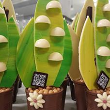 Cactus en chocolat - Chocolaterie du Blason