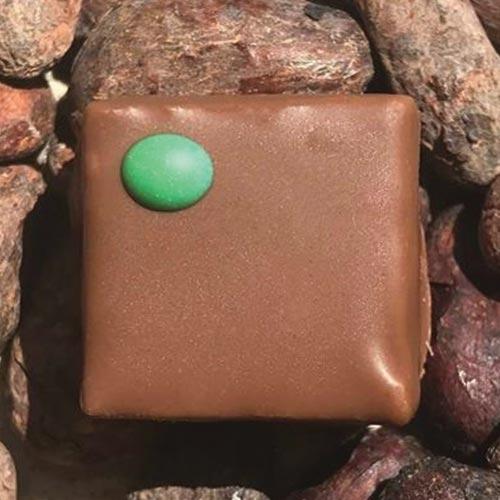Praliné-lait-Pistache - Chocolaterie du Blason