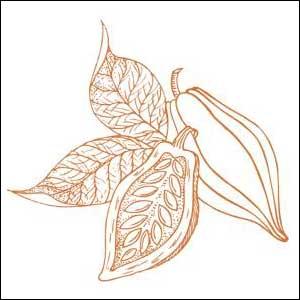 Cabosse cacao - Chocolaterie du Blason